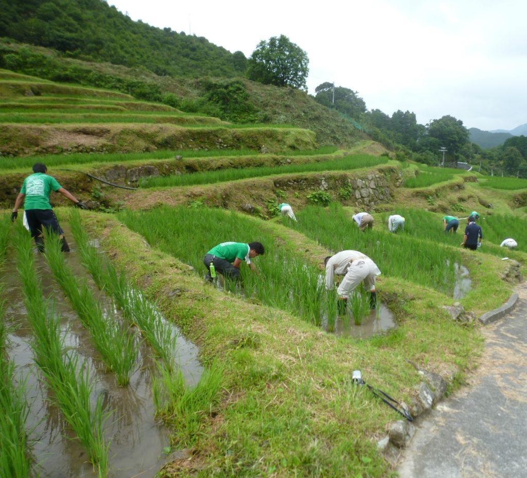 小阪の棚田で草取り体験
